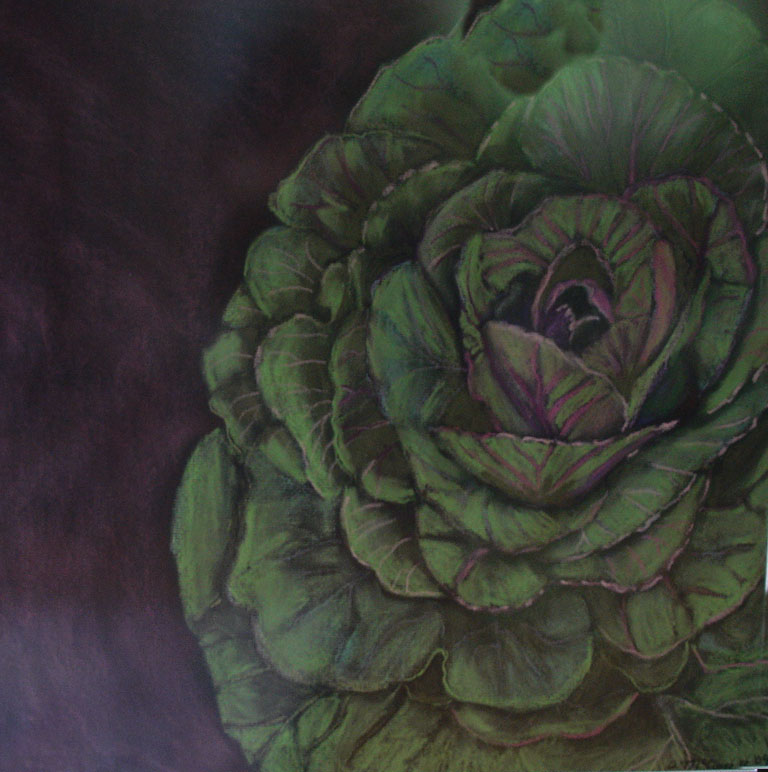 Cabbage copy